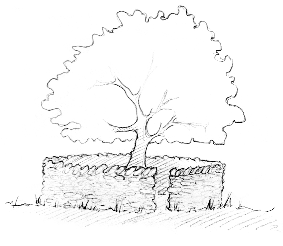 artists impression of the Treefold, once the tree has become established.