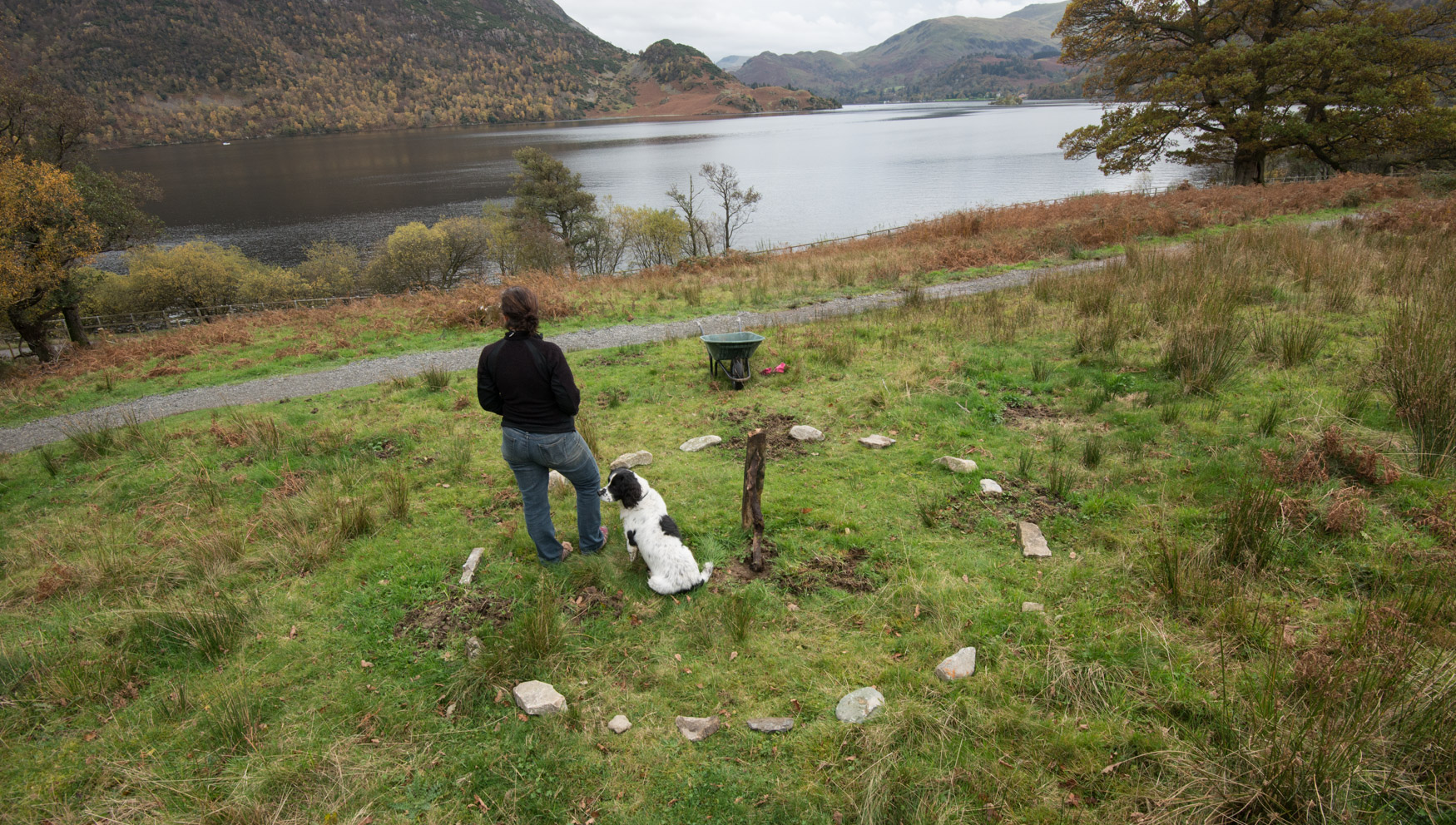 Site of treefold:north before the build, Glencoyne Park