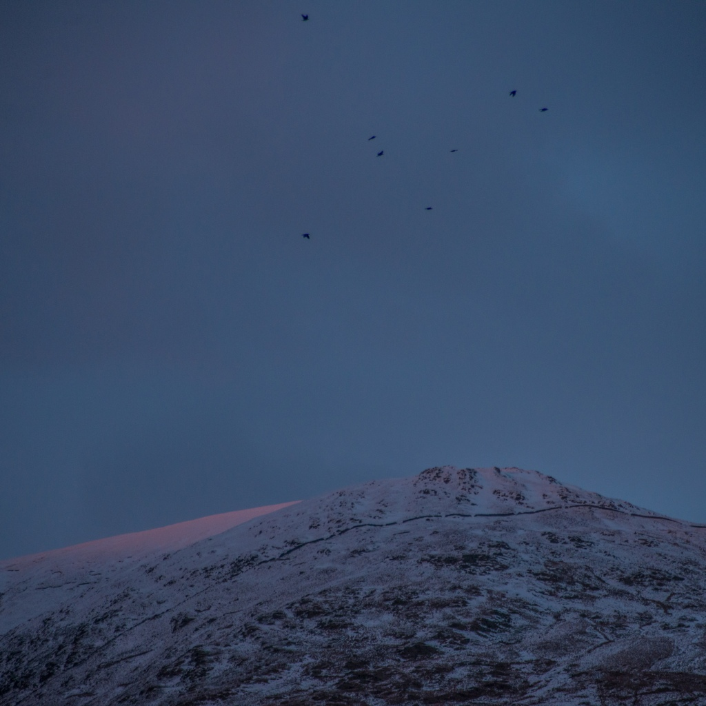 Rooks preparing to roost as the last of the light warms Yoke.