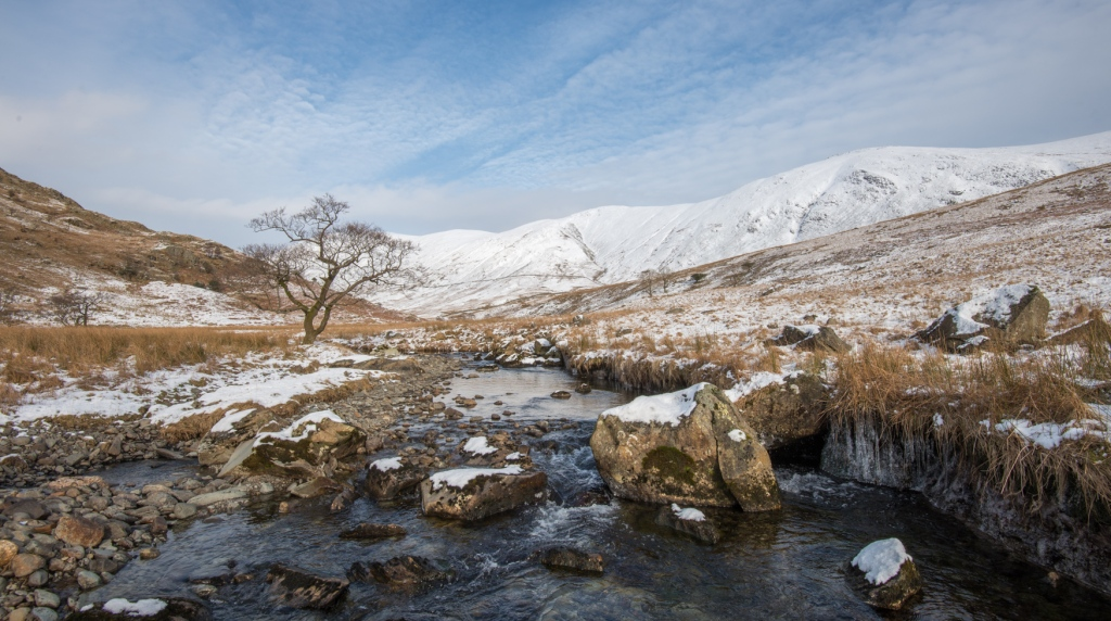 Trout Beck Alder in snow (Wednesday).