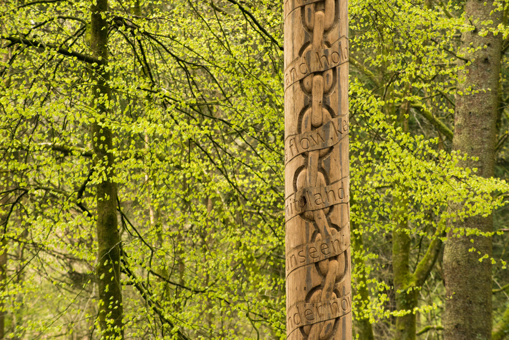 Grizedale Tree Pole