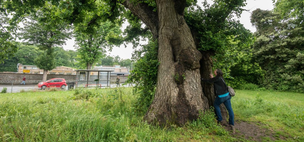 harriet with one of the Preston Elms