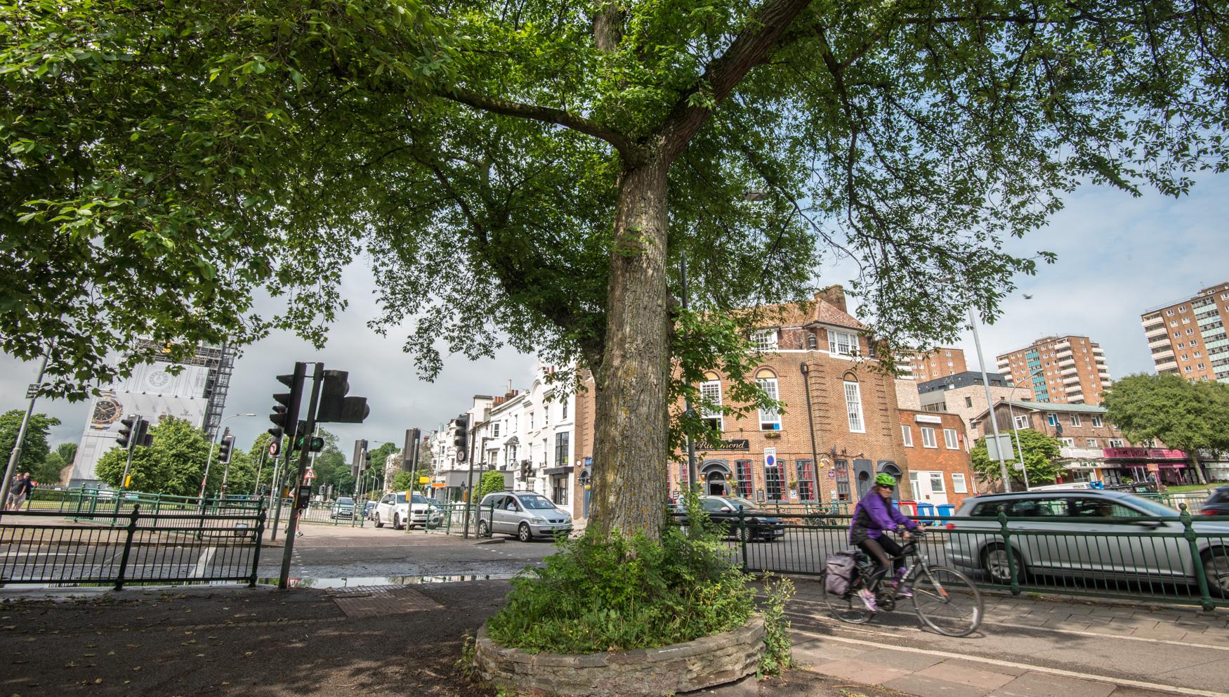 street elm brighton